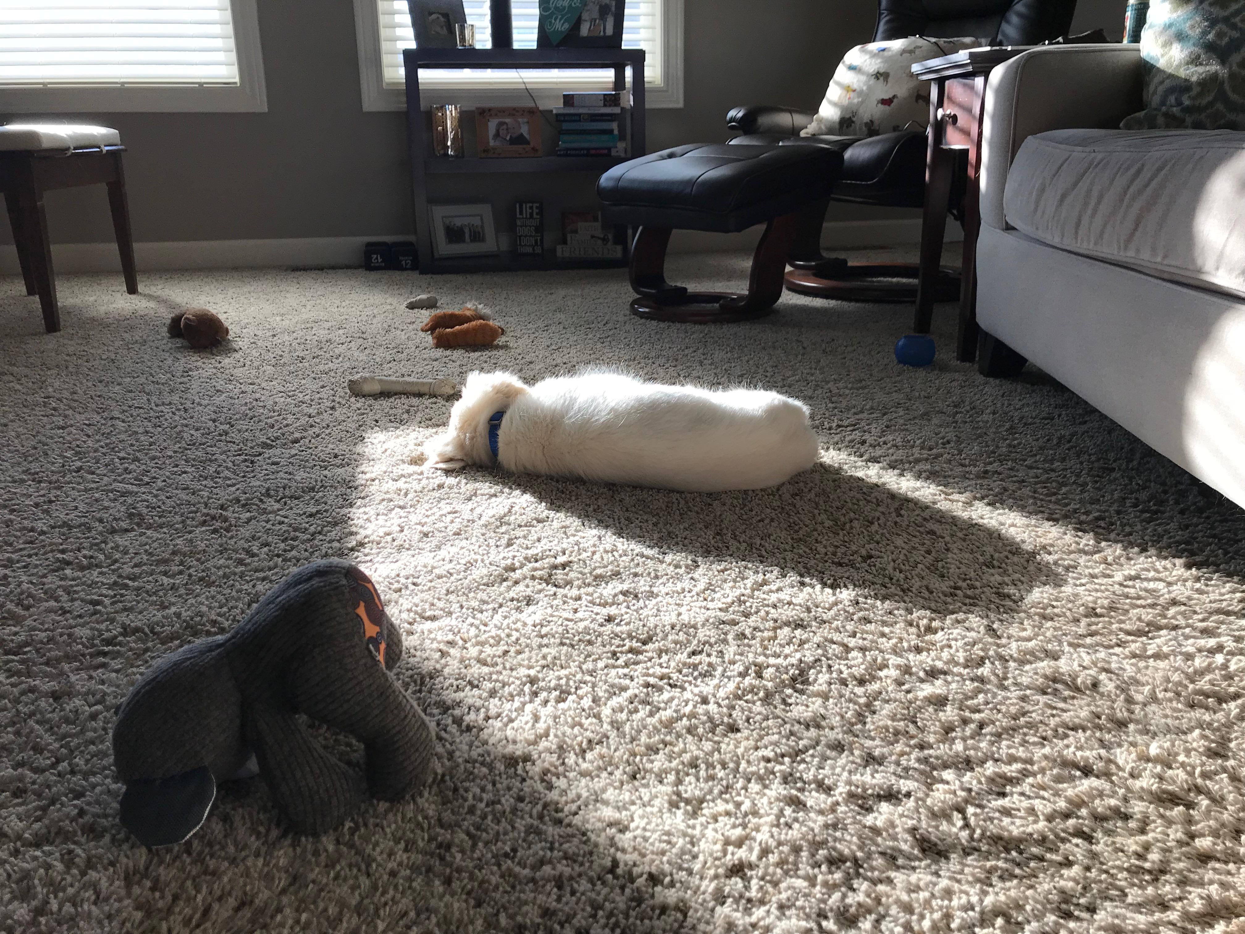 Puppy sleeping on the floor.